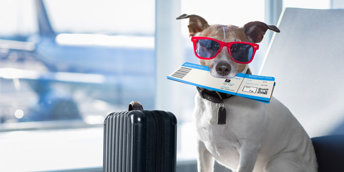 Southwest Airlines to Limit Which Pets are Allowed on Flights